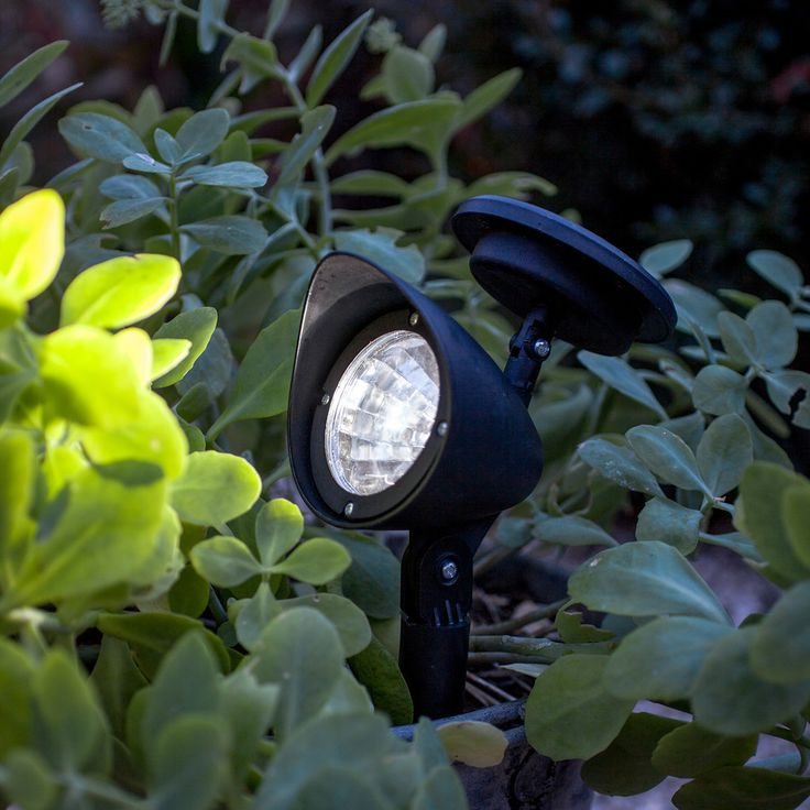 Best 25 Garden spotlights ideas on Pinterest Driveway ideas