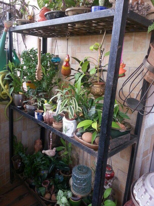 On my balcony stand..Mumbai, India   Gardening   Pinterest ...