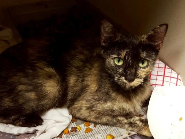 Spca Found Cats And Kittens