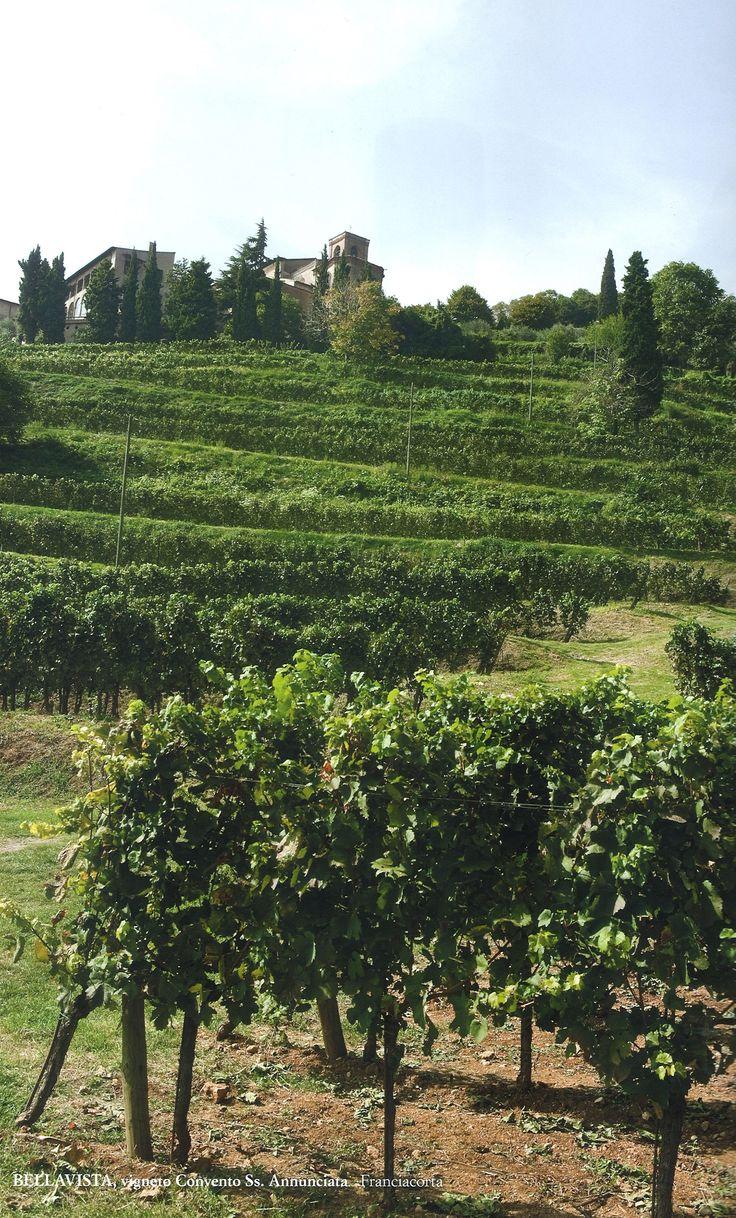 Bellavista #Vineyard #Franciacorta #Tuscany  http://www.bellavistawine.it/index-en.html. Photo by Oliviero Toscani