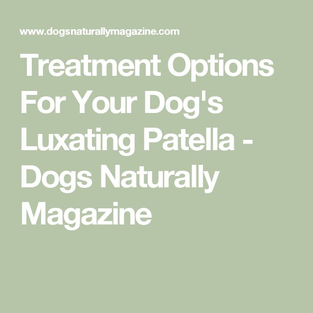 Treatment Options For Your Dog's Luxating Patella - Dogs Naturally Magazine