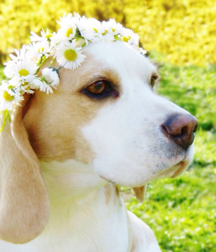 Omg daisy beagle?! Why haven't I done this with mine!