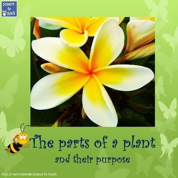 Followers get 50% off for the first 24 hours on new product listings. A PowerPoint presentation on the parts of a plant and their purpose. Suitable for Year 1 and 2 science. Great for teaching living things and environmental education.