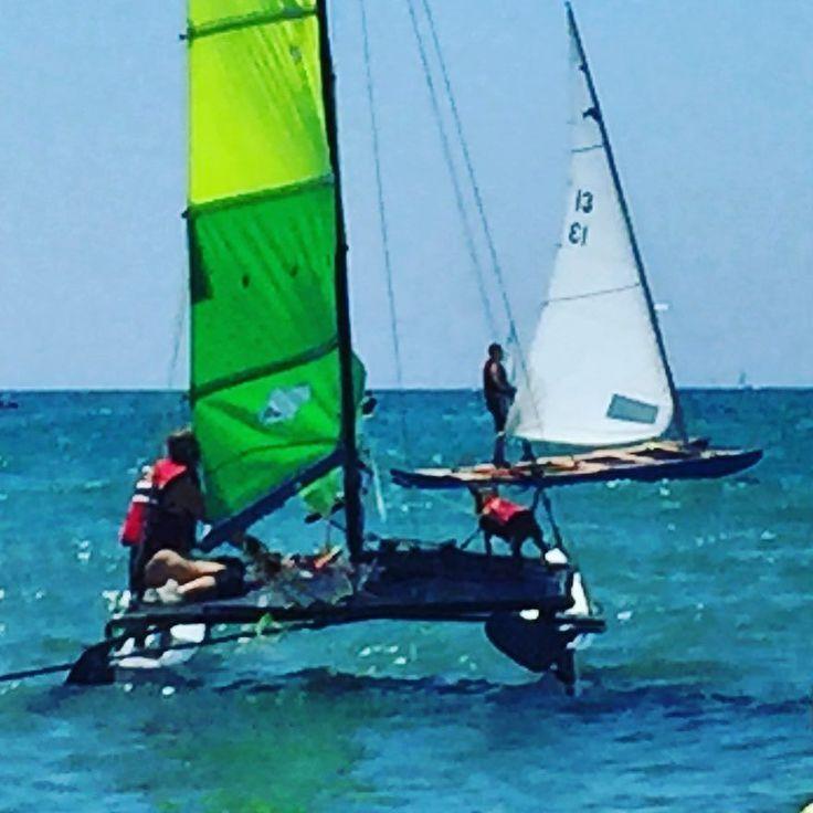Capitanes de barco a cuatro patas eso sí con chaleco salvavidas! #sitges #perro #beach #sea