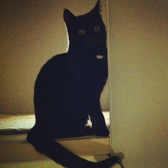 """#pikkumusta #Helmi #kissansilmät #cat #big #eyes"""