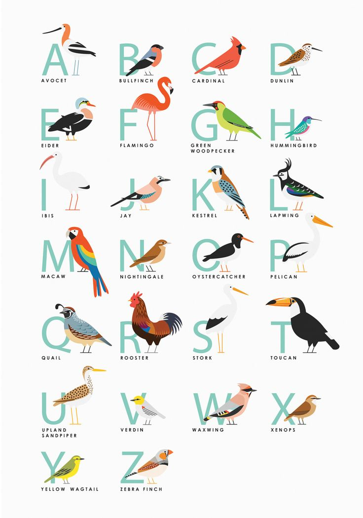 Birds Illustration by Sarah Abbott – www.sarah-abbott.co.uk/ #illustration #bird #birds #animal #animals #icon #icondesign #iconic #picto