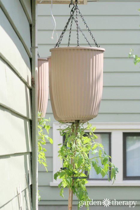 How To Plant An Upside Down Tomato Planter Planters 400 x 300