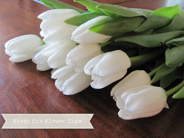 fresh cut flower tips