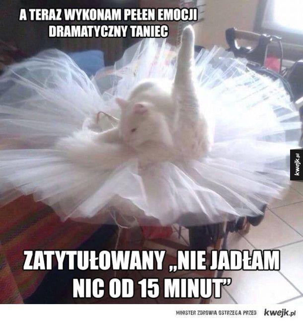 #kwejk #humor #kot