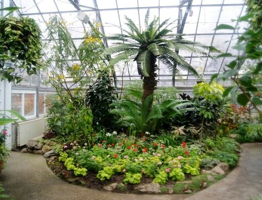 #AllanGardens Conservatory and Park is an oasis downtown #Toronto!: http://www.thepurplescarf.ca/2015/04/explore-toronto-allan-gardens-conservatory-park.html #ExploreTO #thepurplescarf #melanieps #park #garden