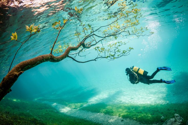 Diver in Magic Kingdom. Green Lake (Grüner See) is located Tragöss Austria. In spring snowmelt raises the lake level about 10 meters. This phenomenon, which lasts only a few weeks covering the hiking trails, meadows, trees. The result is magical to watch