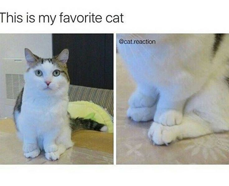 Favourite cat that sits with its front legs on its back legs