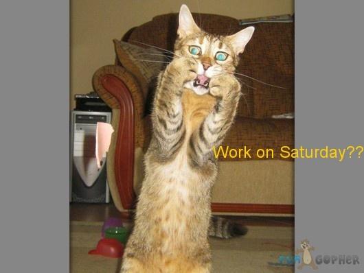 Very Funny Cat Vines