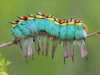 Campioni di Natura, gli scatti vincenti Wild Wonders of Europe