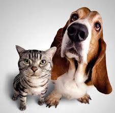 Faça um animalzinho FELIZ!  Mude o destino desses animais FOFINHOS que estão a procura de um novo lar! :)  Conheça o projeto Procure 1 Amigo e adote um focinho :)