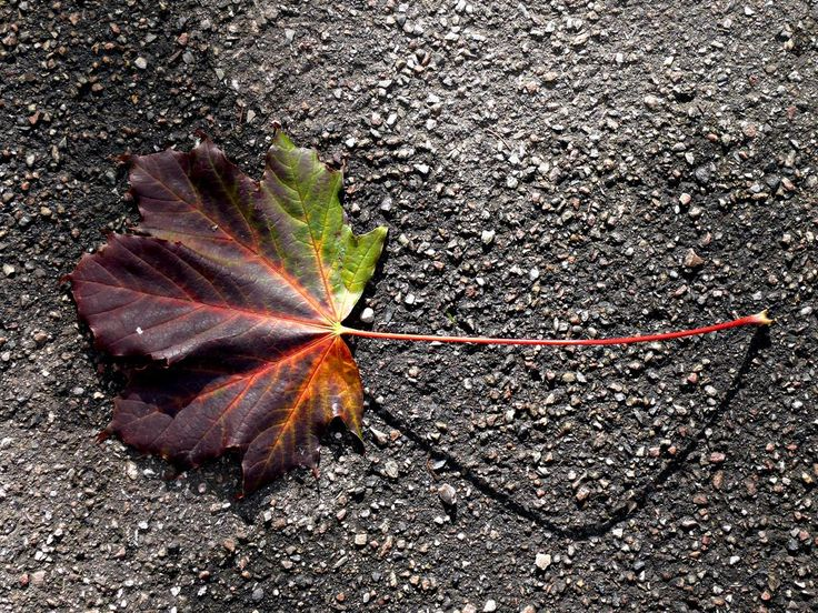 A Leaf on the Ground