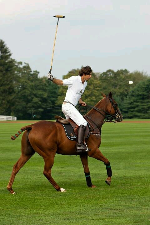 Polo: one of the sports i really want to try