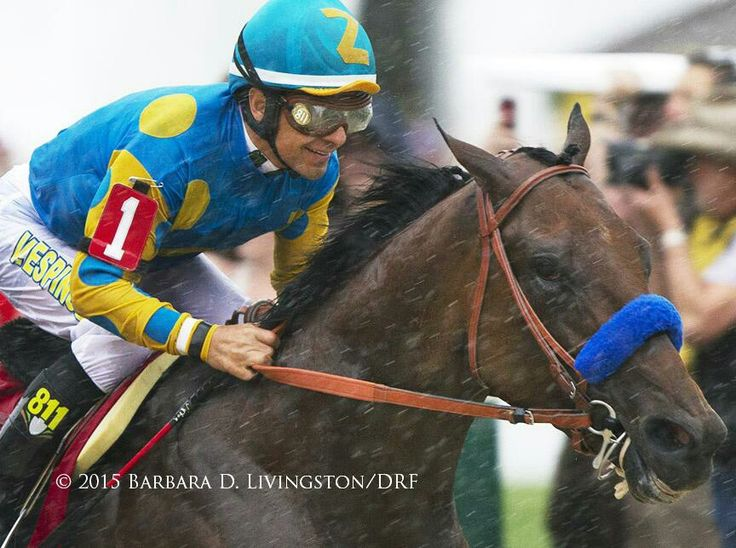 American Pharoah Triple Crown Winner #12 Pioneerof the Nile / Littleprincessemma, by Yankee Gentleman - 2012 Winner of the 2015 Triple Crown and 2014 Champion 2-year-old Two-time Grade 1 winner at 2 of the Del Mar Futurity and FrontRunner S.Triple-digit Beyers in his seven stakes starts, all winsWinner of the Kentucky Derby, Preakness and Belmont S. to become the 12th Triple Crown champion