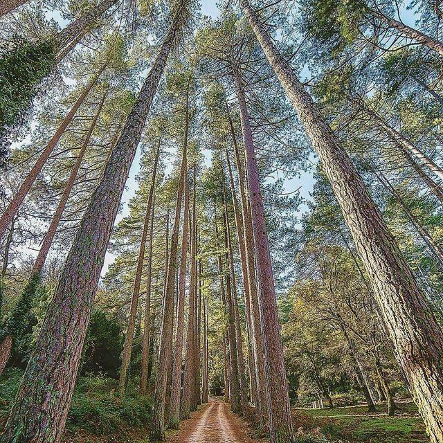 I giganti della foresta di Sa Fraigada , Bultei