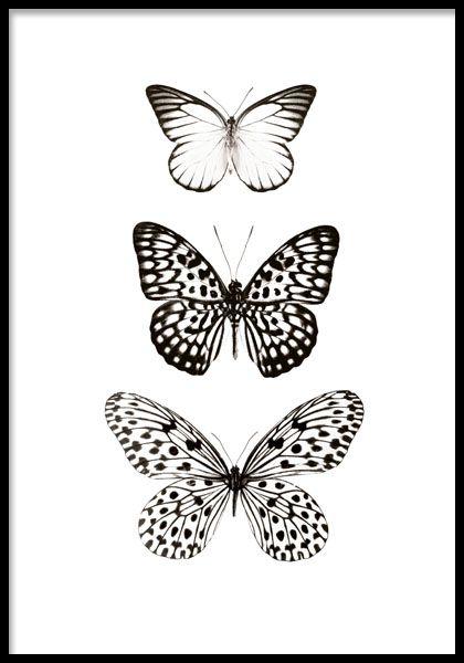 Sort-hvid plakat med sommerfugle.