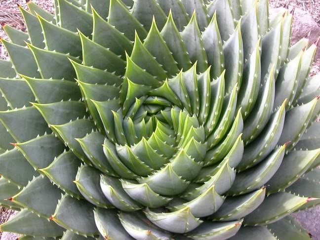 Fibonacci Sequence ( Also presence of Fractals ) in nature
