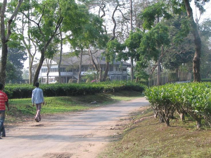 Long view of Kehung burra bungalow. Courtesy Devi Bhuyan