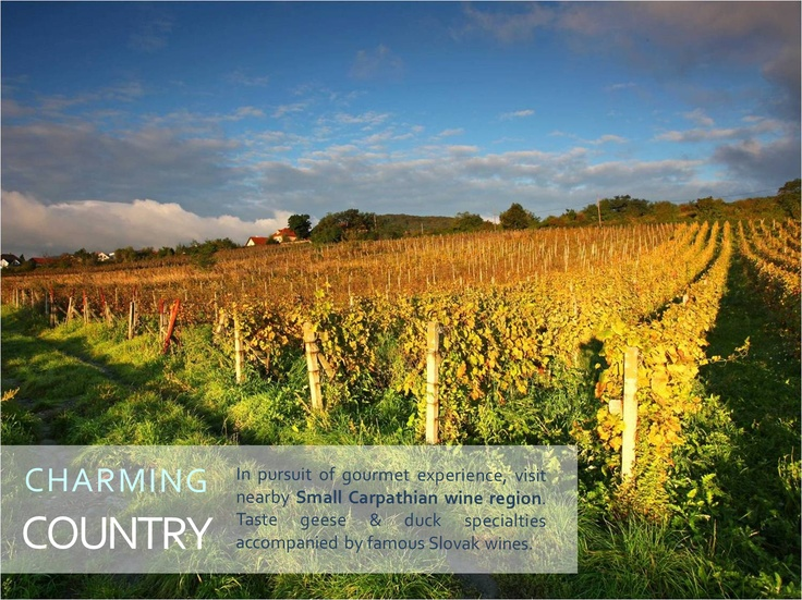 CHARMING COUNTRYSIDE    In pursuit of gourmet experience, visit nearby Small Carpathian wine region.  Taste geese & duck specialties accompanied by famous Slovak wines.