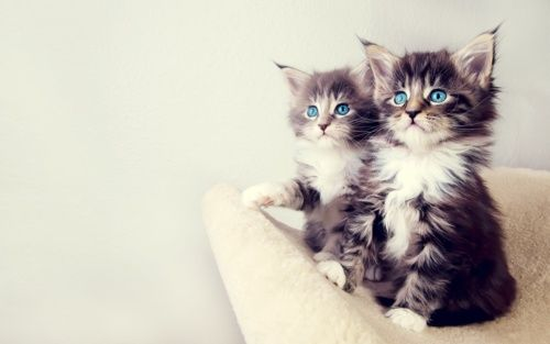 pics of cute cats on tumlr   love cute cats? follow cutest-cats.tumbl…