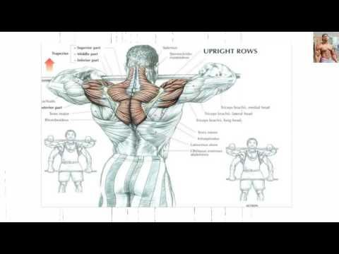 Bodybuilding Exercises/ Best Shoulder workouts For Mass - YouTube