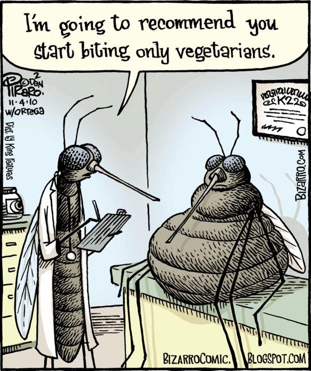 Mücken Witze