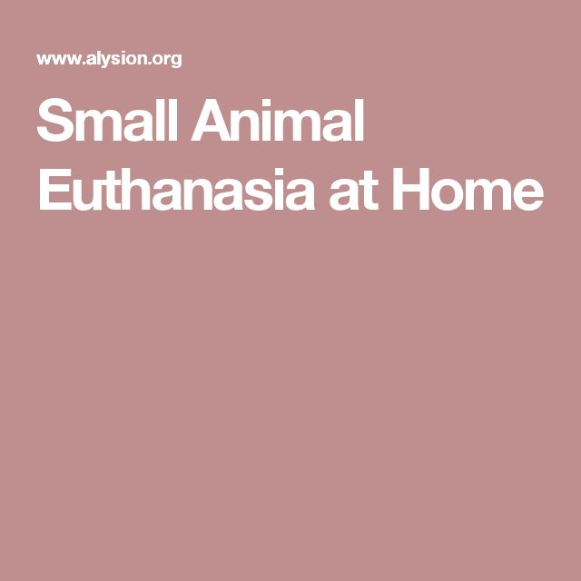 Small Animal Euthanasia at Home