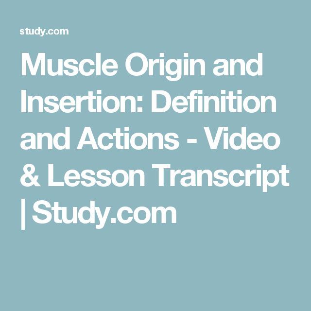 Muscle Origin and Insertion: Definition and Actions - Video & Lesson Transcript | Study.com