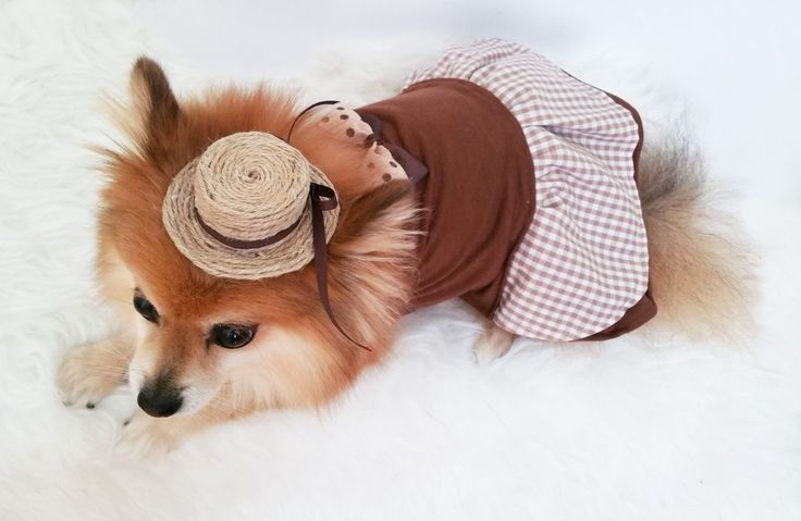 Brown Dog Dress,XS~4XL Size,Gingham checked dog clothes,small dogs clothes,handmade puppy tshirt, gift for dog, girl dog clothes,dog hoodie by puppydoggyclothes on Etsy