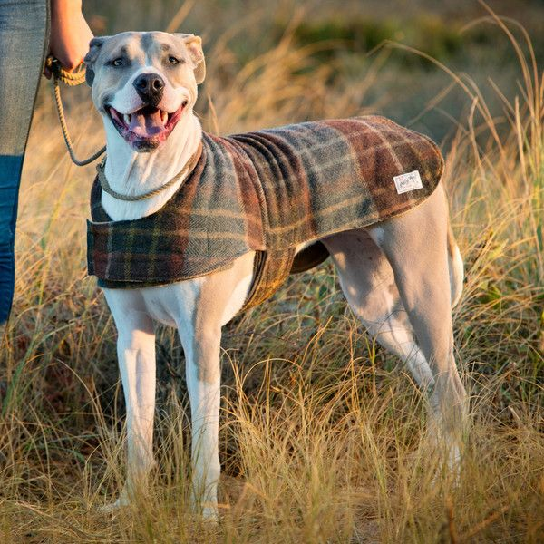 Handcrafted in Brooklyn, this jacket is a classic and draws its inspiration from authentic Americana roots. Perfect for keeping your dog warm in chilly weather!