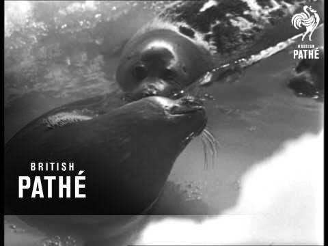 Russia: Baby Seals (1969)