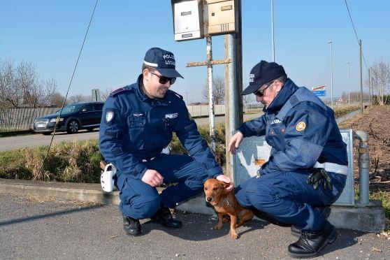 Una brutta storia che speriamo finisca bene!  Trovato un #cagnolino legato ad un palo sulla ex statale tra #Goito e #VoltaMantovana.  Si attendono risposte dall'#Asl di #Giudizzolo per il #microchip.