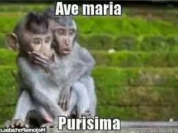 Resultado de imagen para memes de monos de frio