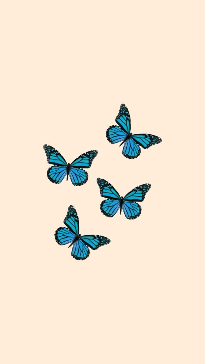 Animation Colorful Butterfly Beautiful Cute Butterfly Watercolor Butterfly Wallpaper Butterfly Background
