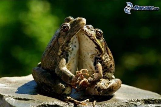 PRANOSTIKA NA UTOROK 25.4.: Koľko žaby pred Markom škrečia, toľko po ňom rady mlčia