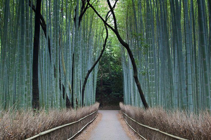 bambuk-10.jpg (750×500)