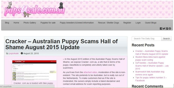 In the August 2015 edition of the Australian Puppy Scams Hall of Shame, we expose Cracker .com.au, a site that in terms of its puppy classifieds is completely and utterly taken over by scammers
