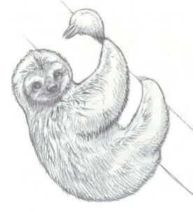 how to draw sloths step 13