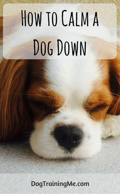 Pin On Dog Companion S Guideline