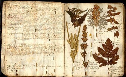 botanical manuscripts