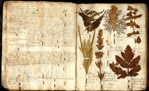 Antonius Münchenberg's  Herbarium vivum  Botanical History  Department of Phanerogamic Botany  Swedish Museum of Natural History