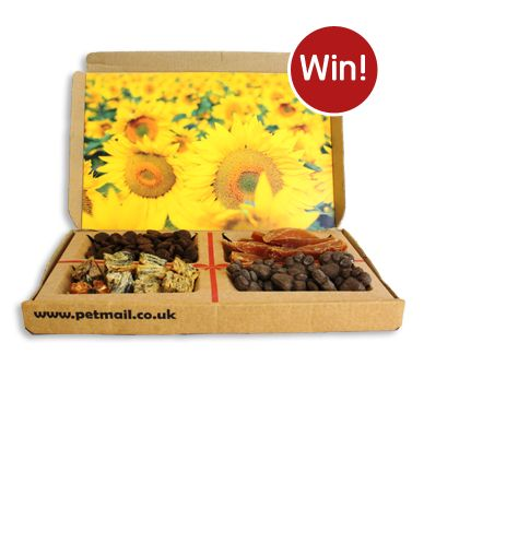 Win A PetMail Treat Box for your dog or cat #supermarketsiesta