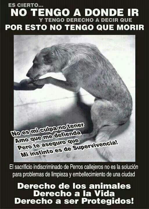 Los animales debe tener respeto a lo mismo cantidad de personas!