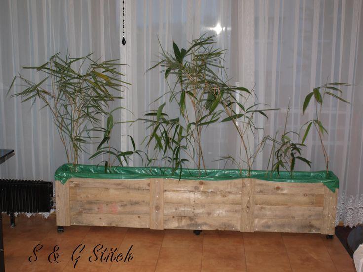 Nachdem auch noch Volldünger zur Erde beigemischt wurde, wurden die Bambusse eingesetzt.
