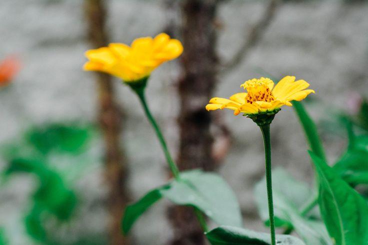 Captain flower 2 - In my grandma´s garden