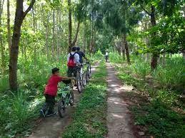 PORTAL INFORMASI - RENTAL MOBIL JOGJA   YOGYAKARTA: Hamparan Hijau di Hutan Wanagama - Wonosari - Yogy...